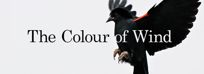 The colour of wind